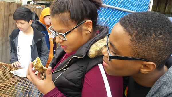Middle-schoolers observe shellfish for their hands-on science project.