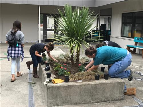 Volunteers work on weeding and planting flowers in a planter at Mountain View.